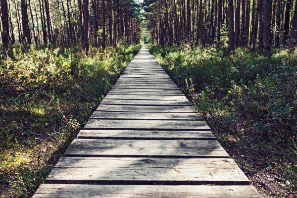 Praying with the Senses Nature Walk