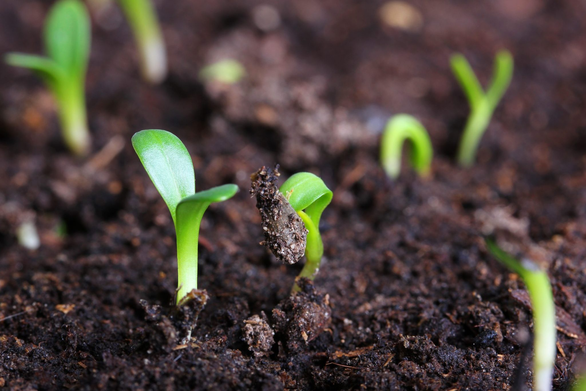 Soil and Soul: The Science and Spirituality of Gardening